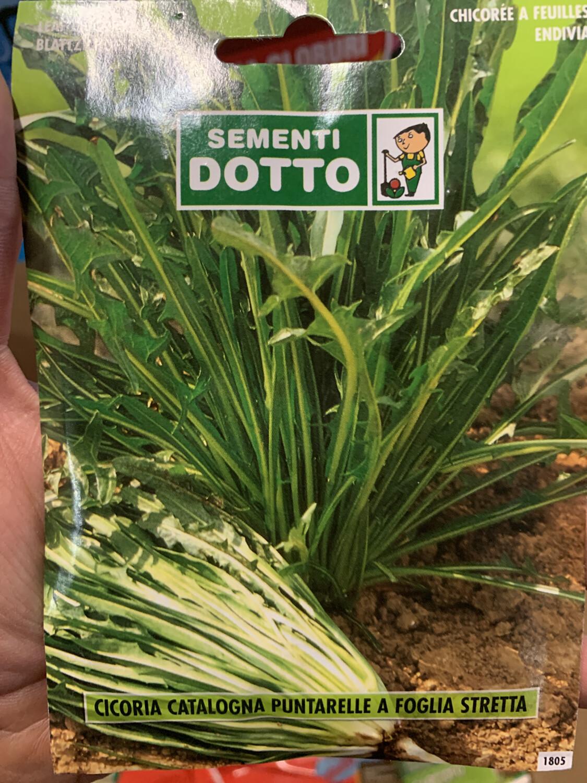 Cicoria catalogna puntarelle BUSTA SEMI