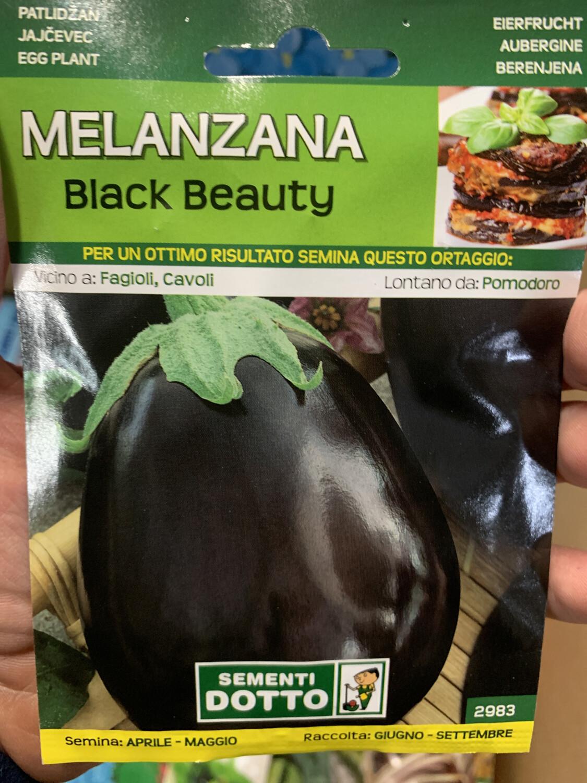 Melanzana black beauty tonda BUSTA SEMI