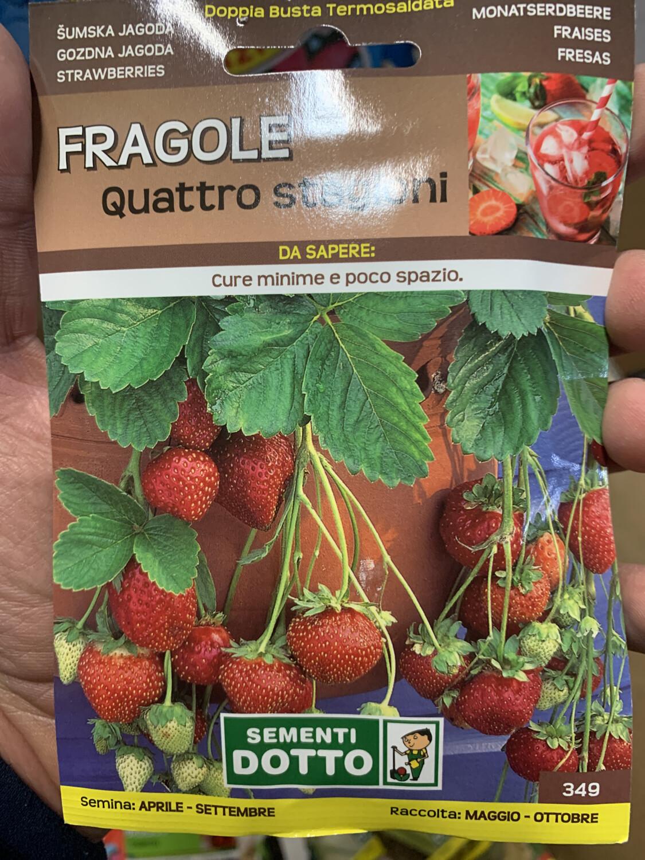 Fragole quattro stagioni BUSTA SEMI