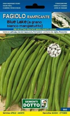Fagiolino Nano Rampicante BLUE LAKE 250 grammi BUSTA SEMI