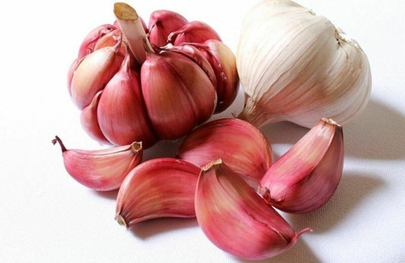 AGLIO ROSSO - Allium sativum var. ophioscorodon 'Red Sicilian' - conf. ORTO 6pz