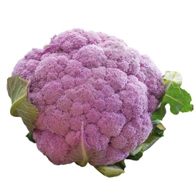 CAVOLO CAVOLFIORE VIOLA o VIOLETTO - Brassica oleracea var. botrytis - conf. ORTO 8pz