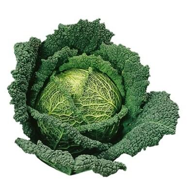 CAVOLO VERZA TARDIVO - Brassica oleracea var. sabauda - conf. ORTO 6pz