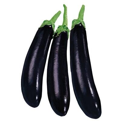 MELANZANA NERA LUNGA - Solanum melongena - Vaso 14 Cm INNESTATO