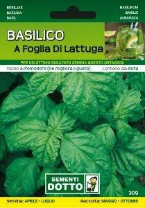 BASILICO A FOGLIA DI LATTUGA - Ocimum basilicum - busta semi
