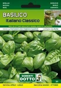 BASILICO ITALIANO CLASSICO - Ocimum basilicum - busta semi