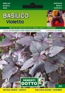 BASILICO VIOLETTO / NERO - Ocimum basilicum - busta semi