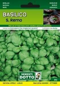 BASILICO SAN REMO - Ocimum basilicum - busta semi