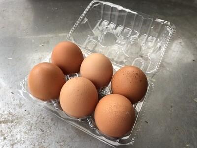 吉野農園の平飼い卵 6個(火・水・木のみ配達可)