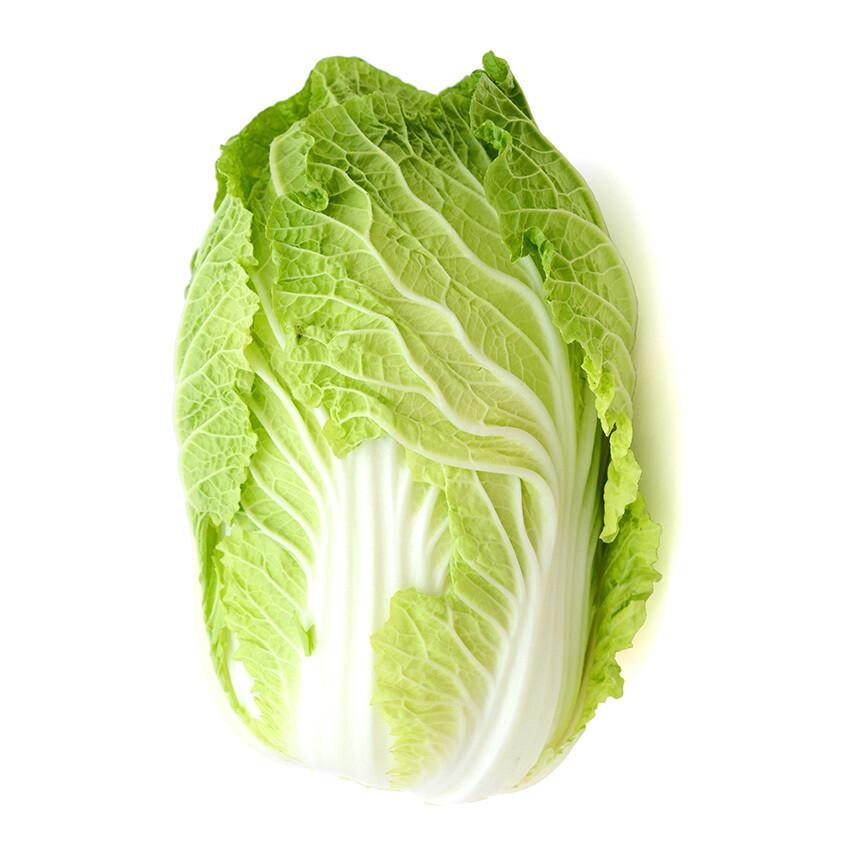 Cabbage Napa