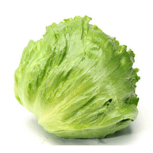 Lettuce Iceberg
