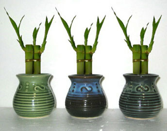 Lucky Bamboo (Starting at $850 for 96 Sets)