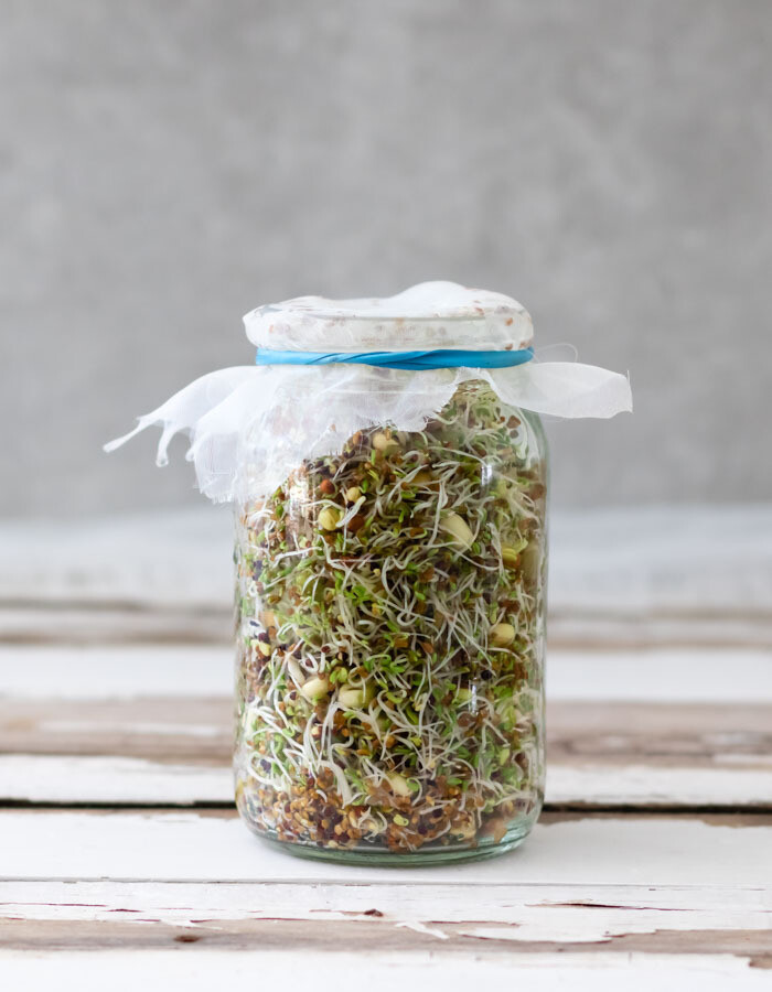 Sprouting seeds - Jar of the Week