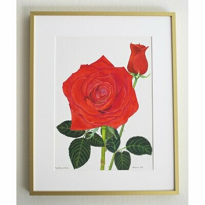 "Red Rose and Bud – Double Matted ""Hand-Signed Print"" by Stephanie Scott"