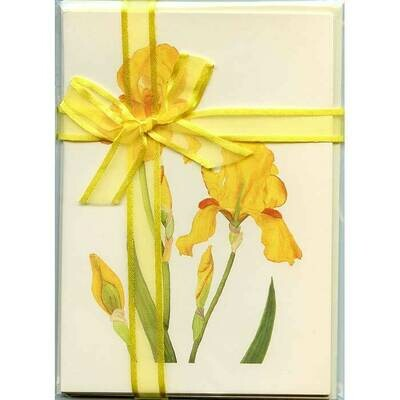 Yellow Bearded Iris – Floral Notecard 4 Card Gift Pack by Stephanie Scott