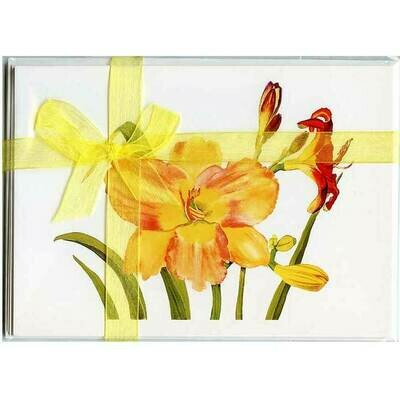 Daylilies – Floral Notecard 4 Card Gift Pack by Stephanie Scott