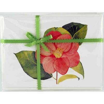 Camellia Japonica – Floral Notecard 4 Card Gift Pack by Stephanie Scott