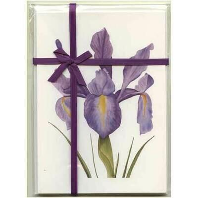 Dutch Iris – Floral Notecard 4 Card Gift Pack by Stephanie Scott