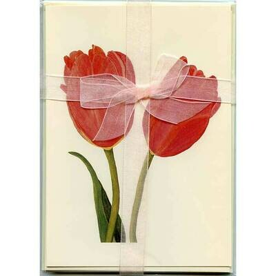 Tulips – Floral Notecard 4 Card Gift Pack by Stephanie Scott