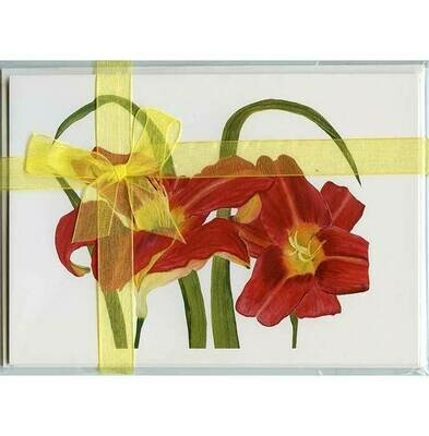 Red Daylilies – Floral Notecard 4 Card Gift Pack by Stephanie Scott
