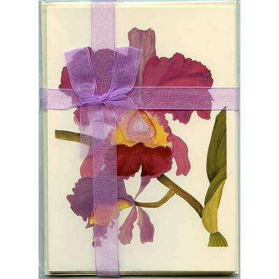 Cattleya Orchid – Floral Notecard 4 Card Gift Pack by Stephanie Scott