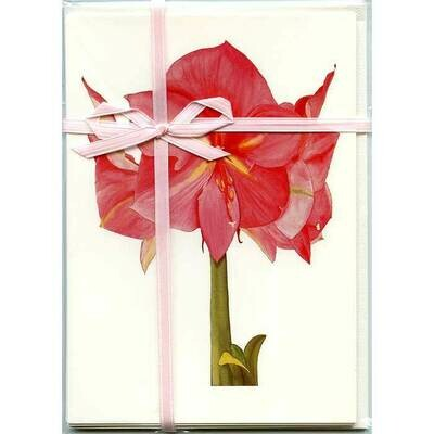 Pink Amaryllis – Floral Notecard 4 Card Gift Pack