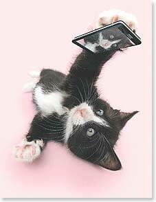 Cat Selfie Birthday Card