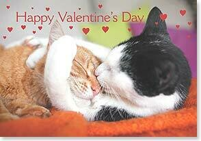 Valentine's Day Card: I love you furry much!