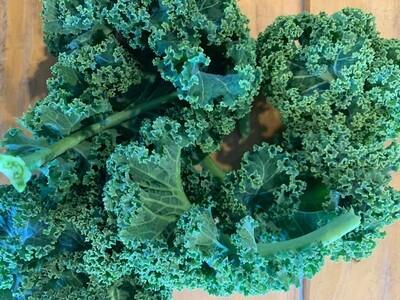 Kale Bunch - Mixed Varieties
