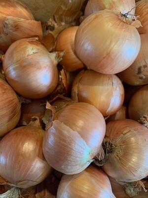 Onions (1 lb)