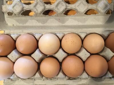 Eggs - (Wicked Bines)