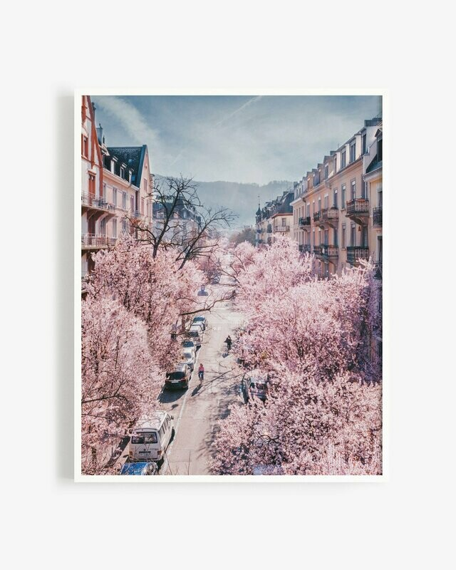 Cherry blossoms season