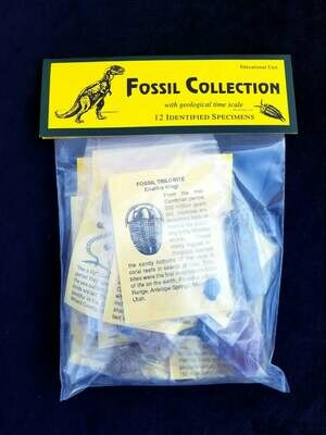 Fossil Collection with geological time scale