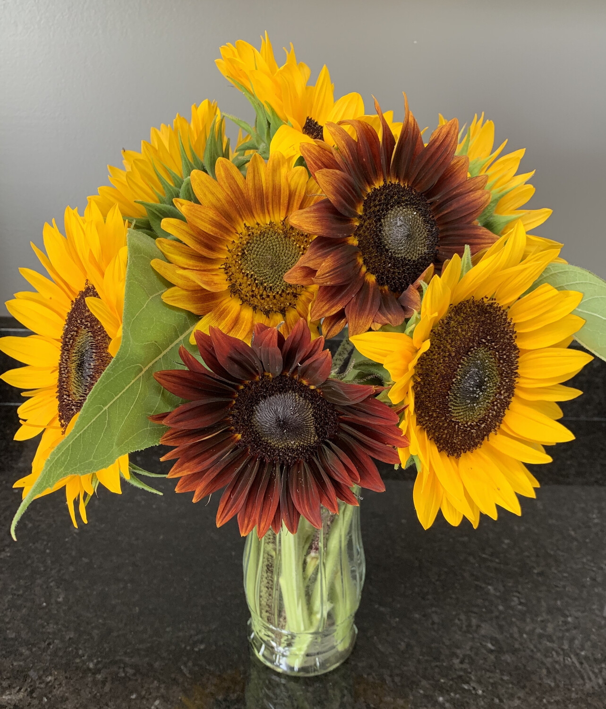 Large Cut-Flower Sunflower Bouquet