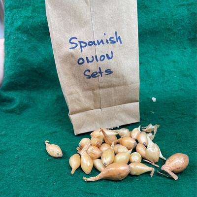 Onion Set Spanish