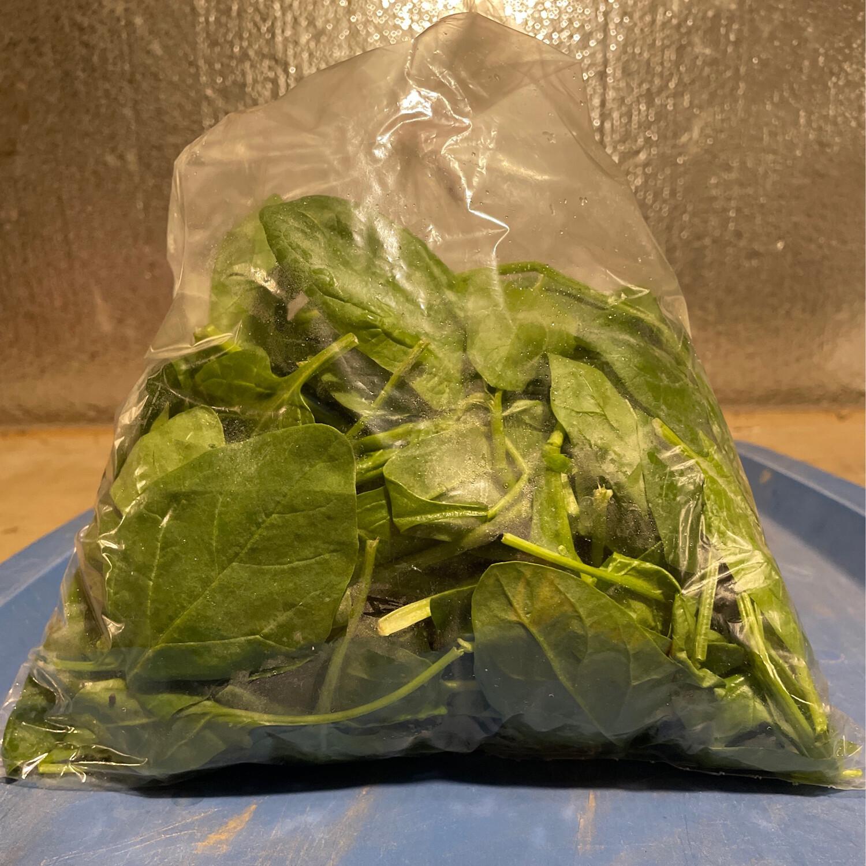 Spinach Medium