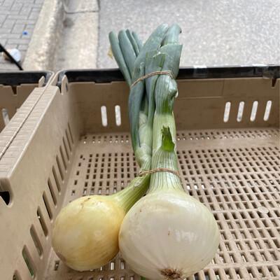 Onions Yellow 1/lb