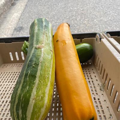 Zucchini Large