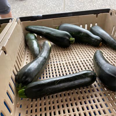 Zucchini Small