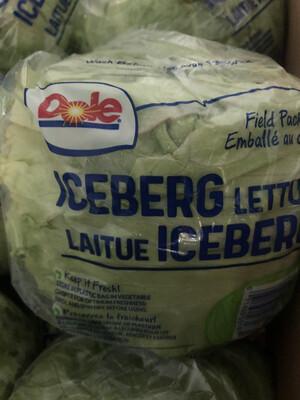 Iceberg Lettuce (1)