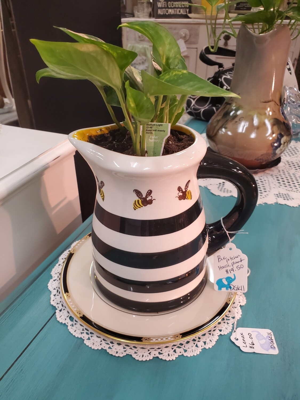 Plant in Bee Vase