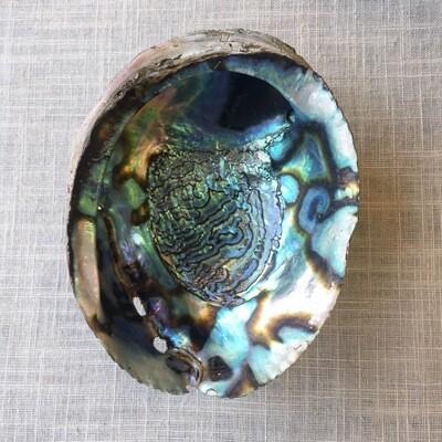 Abalone Shell Vessel