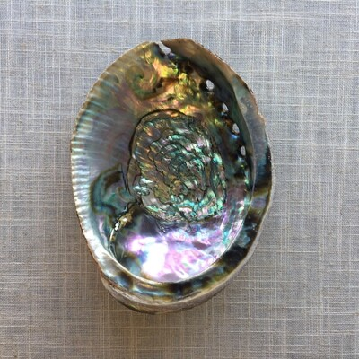 Abalone Shell Smudging Vessel