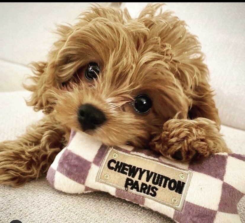 HDD Chewy Vuitton  Bone Checker Large