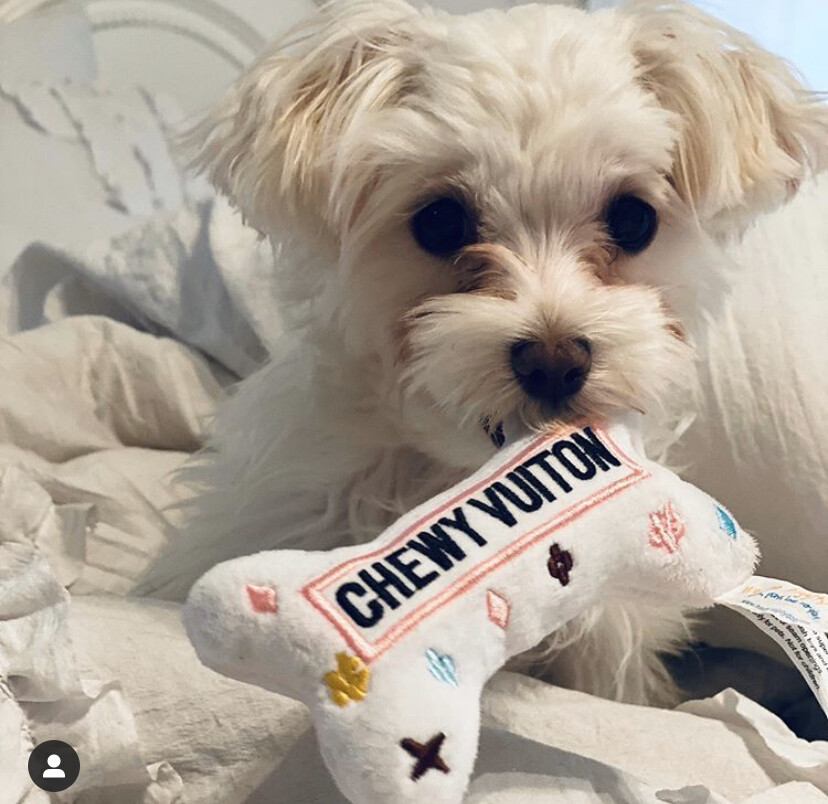 HDD Chewy Vuitton Large Bone White