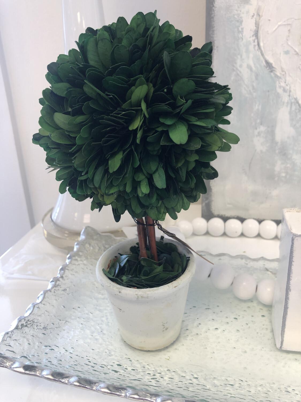 """9"""" Boxwood Topiary"""