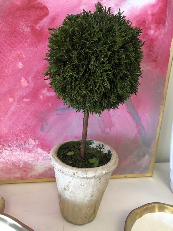 Cypress Topiary Medium