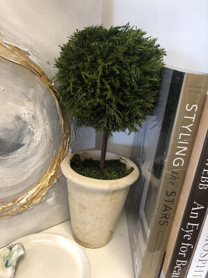 Cypress Topiary Large