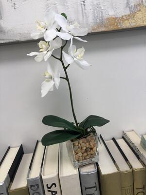 K&K Orchid Dish