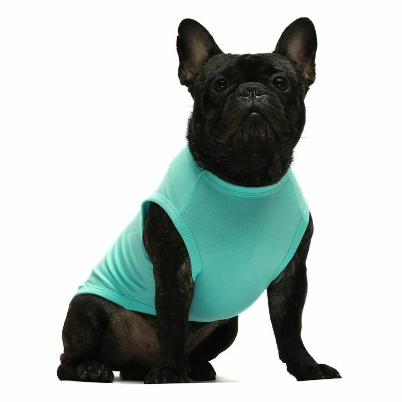 FW Dog Clothes Turquoise Small